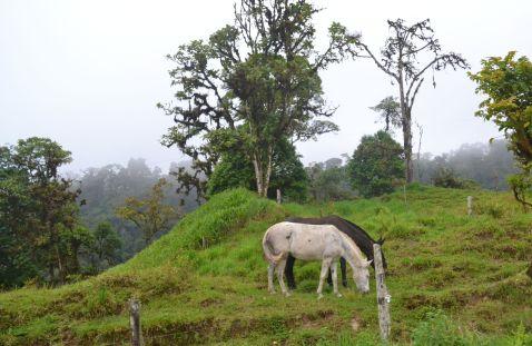 Ecuador horses